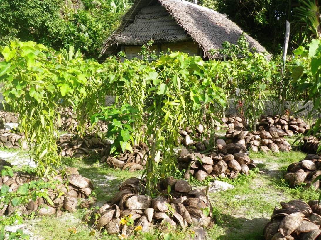 jardins sous marins du 4 au 18 juillet 2010 rahui. Black Bedroom Furniture Sets. Home Design Ideas